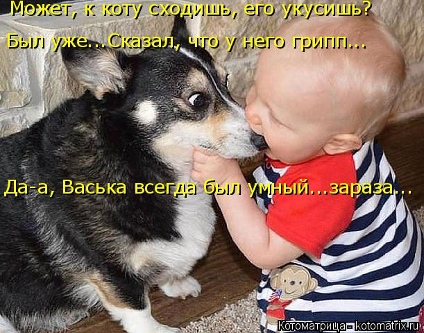 Котоматрица: Может, к коту сходишь, его укусишь? Был уже...Сказал, что у него грипп... Да-а, Васька всегда был умный...зараза...