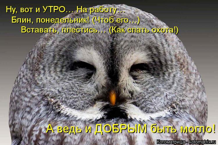 Котоматрица: Ну, вот и УТРО… На работу… Блин, понедельник! (Чтоб его…) Вставать, плестись… (Как спать охота!) А ведь и ДОБРЫМ быть могло!
