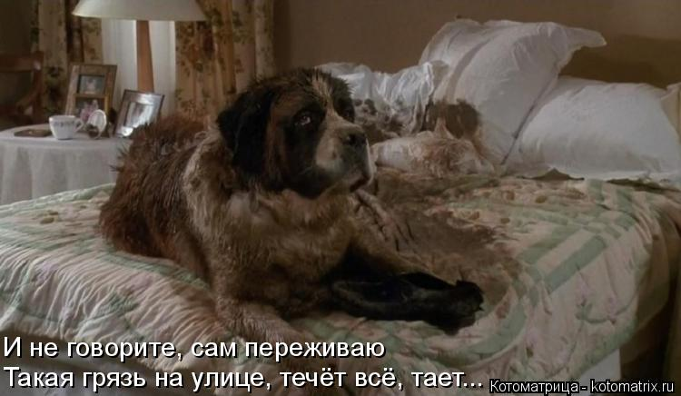 Котоматрица: И не говорите, сам переживаю  Такая грязь на улице, течёт всё, тает...