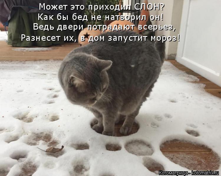 Котоматрица: Может это приходил СЛОН? Как бы бед не натворил он! Ведь двери потрадают всерьез, Разнесет их, в дом запустит мороз!