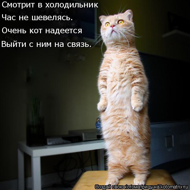 Котоматрица: Смотрит в холодильник Час не шевелясь. Очень кот надеется Выйти с ним на связь.