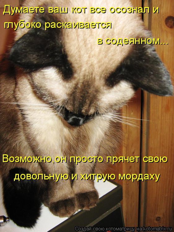 Котоматрица: Думаете ваш кот все осознал и глубоко раскаивается  в содеянном... Возможно,он просто прячет свою довольную и хитрую мордаху