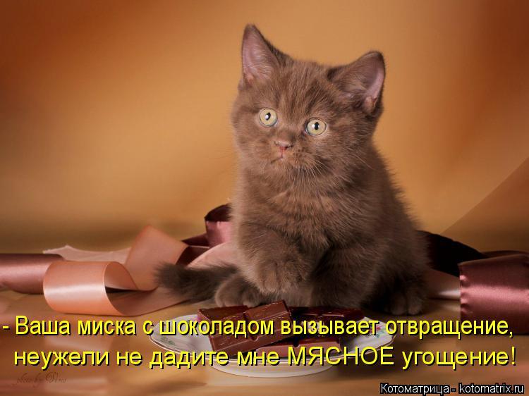Котоматрица: - Ваша миска с шоколадом вызывает отвращение, неужели не дадите мне МЯСНОЕ угощение!