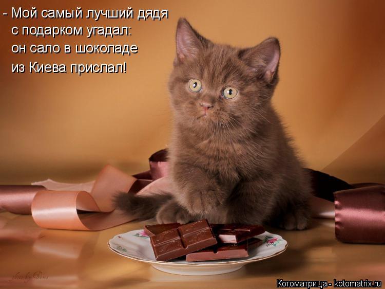 Котоматрица: - Мой самый лучший дядя  с подарком угадал:  он сало в шоколаде из Киева прислал!