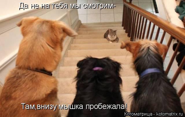 Котоматрица: Да не на тебя мы смотрим- Там,внизу мышка пробежала!