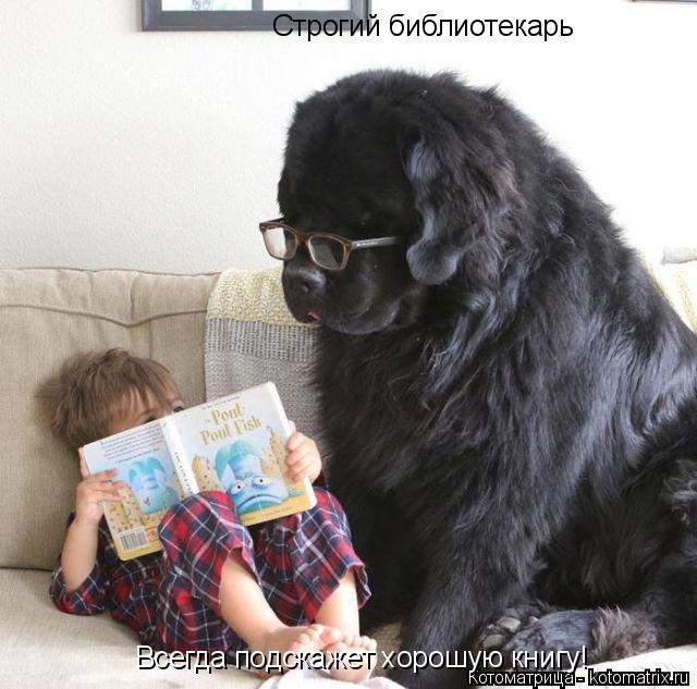 Котоматрица: Строгий библиотекарь Всегда подскажет хорошую книгу!