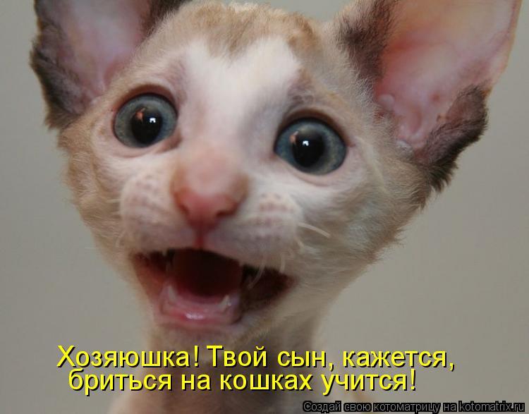 Котоматрица: бриться на кошках учится! Хозяюшка! Твой сын, кажется,