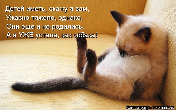 Котоматрица: Детей иметь, скажу я вам, Ужасно тяжело, однако. Они еще и не родились, А я УЖЕ устала, как собака!