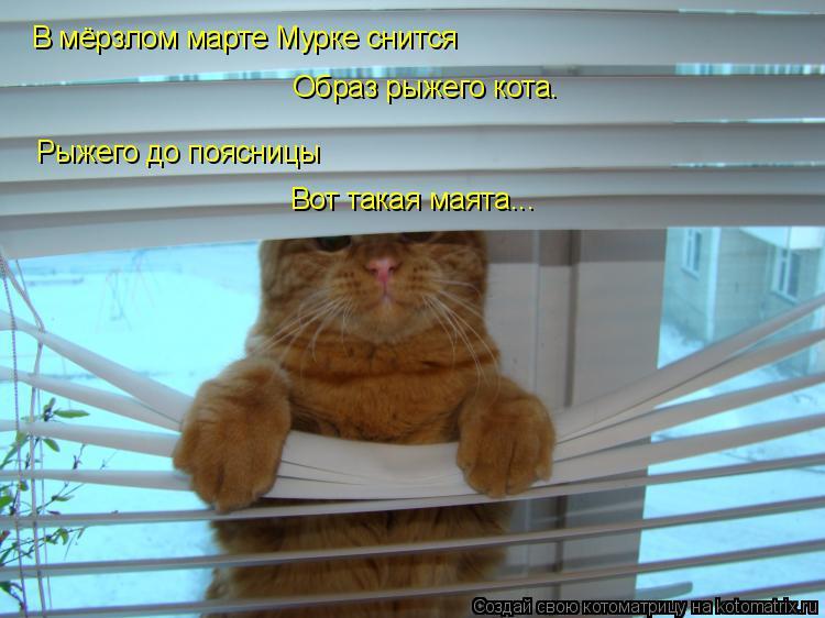 Котоматрица: В мёрзлом марте Мурке снится  Образ рыжего кота.   Рыжего до поясницы  Вот такая маята...