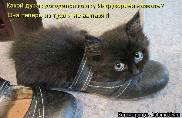 Котоматрица: Какой дурак догадался кошку Инфузорией назвать? Она теперь из туфли не вылазит!