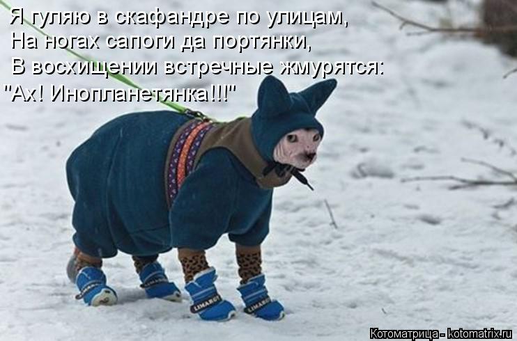 """Котоматрица: Я гуляю в скафандре по улицам, На ногах сапоги да портянки, В восхищении встречные жмурятся: """"Ах! Инопланетянка!!!"""""""