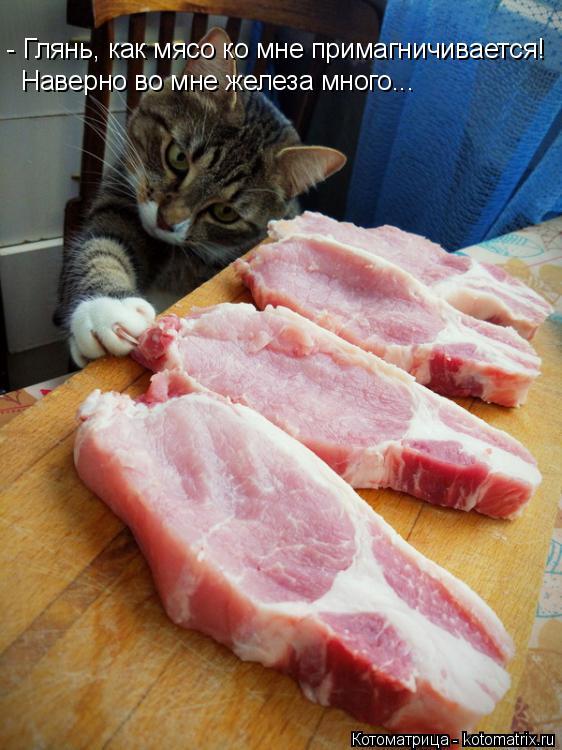 Котоматрица: - Глянь, как мясо ко мне примагничивается! Наверно во мне железа много...