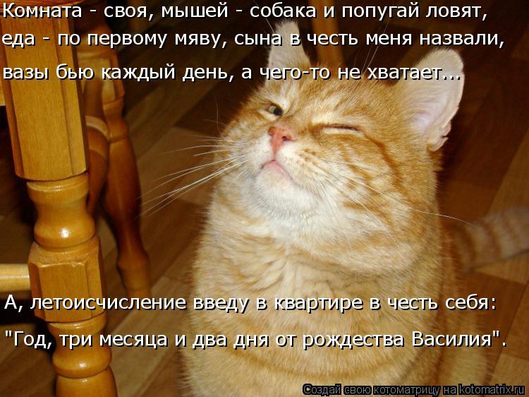 """Котоматрица: Комната - своя, мышей - собака и попугай ловят,  А, летоисчисление введу в квартире в честь себя: """"Год, три месяца и два дня от рождества Васили?"""