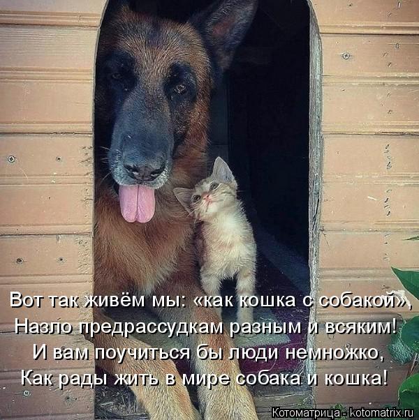 Котоматрица: Вот так живём мы: «как кошка с собакой», Назло предрассудкам разным и всяким! И вам поучиться бы люди немножко, Как рады жить в мире собака и ?