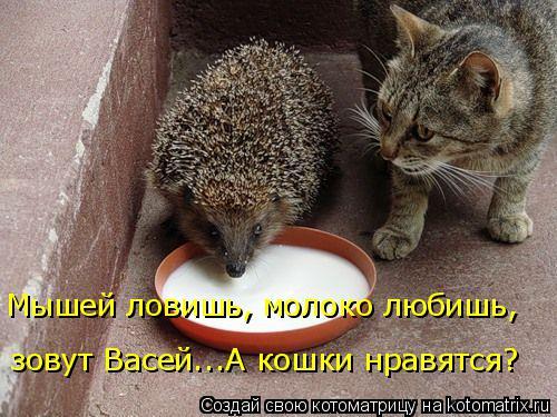 Котоматрица: Мышей ловишь, молоко любишь,  зовут Васей...А кошки нравятся?