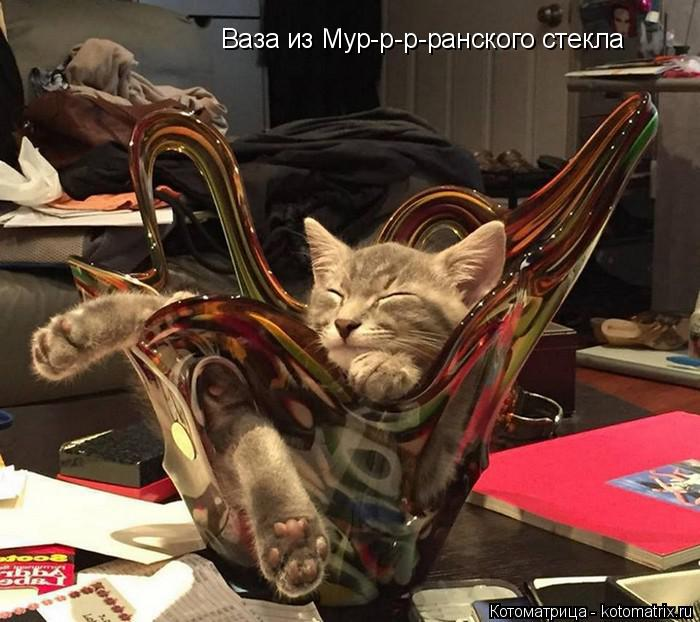 Котоматрица: Ваза из Мур-р-р-ранского стекла