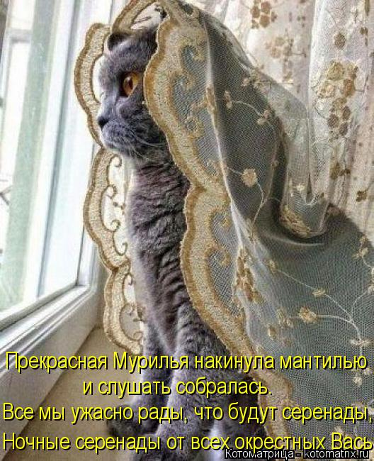 Котоматрица: Прекрасная Мурилья накинула мантилью и слушать собралась. Все мы ужасно рады, что будут серенады, Ночные серенады от всех окрестных Вась!