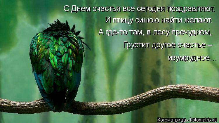 Котоматрица: С Днем счастья все сегодня поздравляют. И птицу синюю найти желают. А где-то там, в лесу пречудном, Грустит другое счастье –  изумрудное…