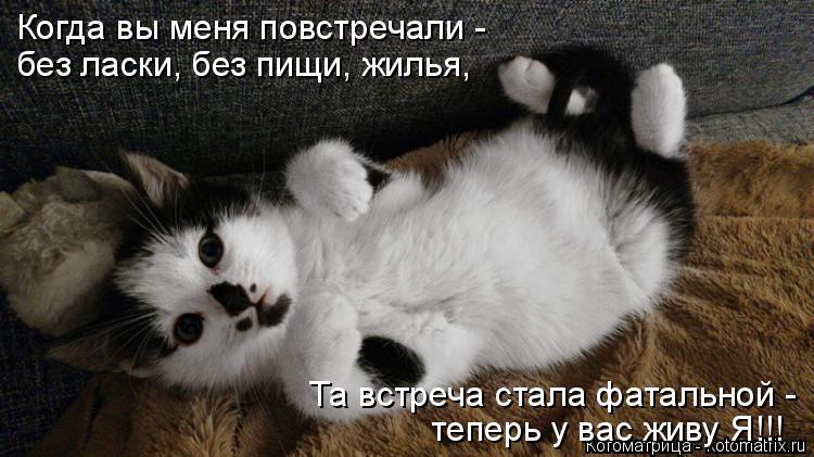 Котоматрица: Когда вы меня повстречали - без ласки, без пищи, жилья, Та встреча стала фатальной - теперь у вас живу Я!!!