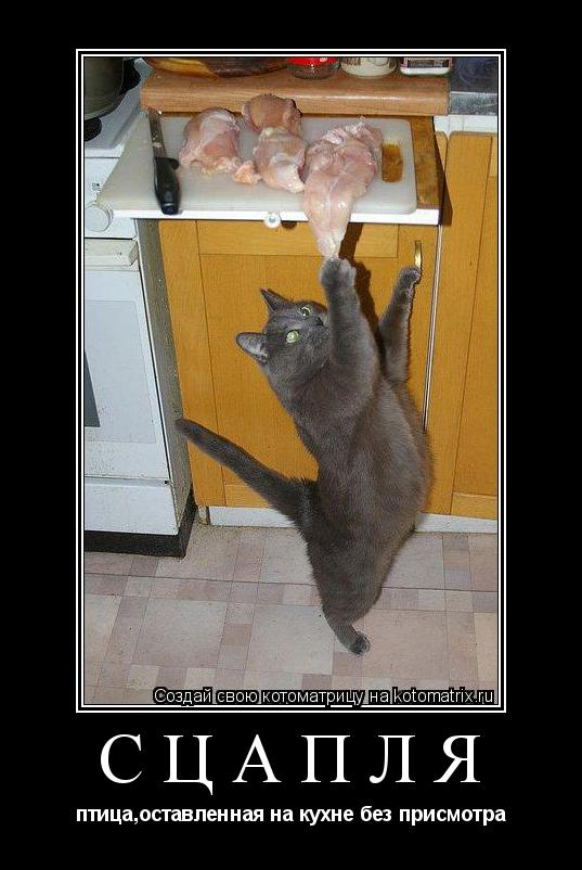 Котоматрица: СЦАПЛЯ птица,оставленная на кухне без присмотра