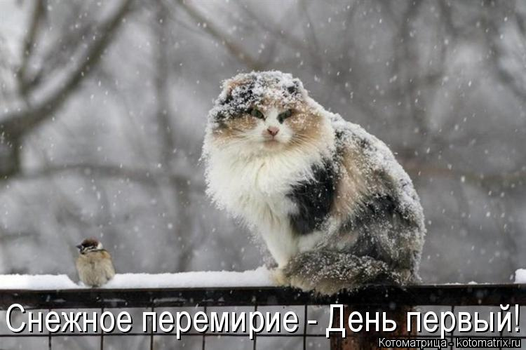 Котоматрица: Снежное перемирие - День первый!