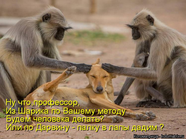 http://kotomatrix.ru/images/lolz/2018/03/22/kotomatritsa_W.jpg