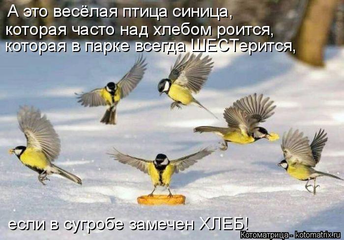 Котоматрица: А это весёлая птица синица, которая в парке всегда ШЕСТерится, которая часто над хлебом роится, если в сугробе замечен ХЛЕБ!