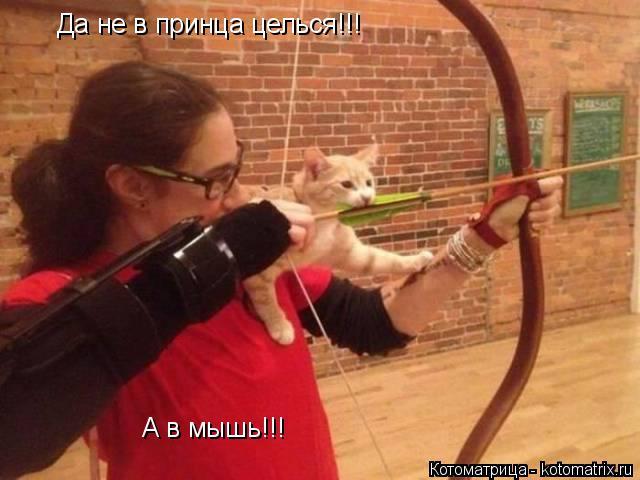 Котоматрица: Да не в принца целься!!! А в мышь!!!