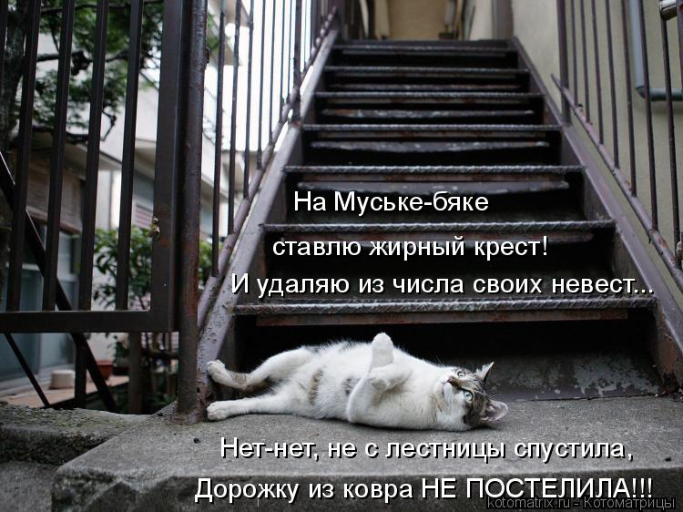 Котоматрица: На Муське-бяке  ставлю жирный крест! И удаляю из числа своих невест... Нет-нет, не с лестницы спустила, Дорожку из ковра НЕ ПОСТЕЛИЛА!!!