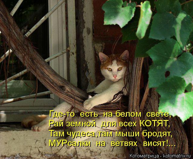 Котоматрица: Где-то  есть  на белом  свете, Рай земной  для всех КОТЯТ, Там чудеса,там мыши бродят, МУРсалки  на  ветвях  висят!...