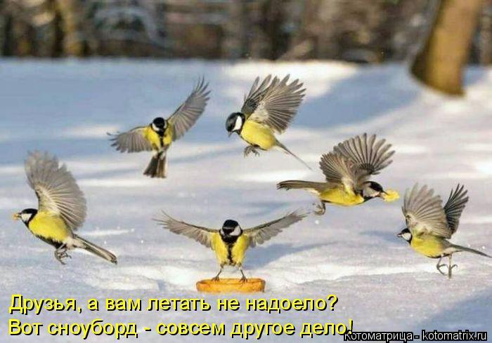 Котоматрица: Друзья, а вам летать не надоело? Вот сноуборд - совсем другое дело!