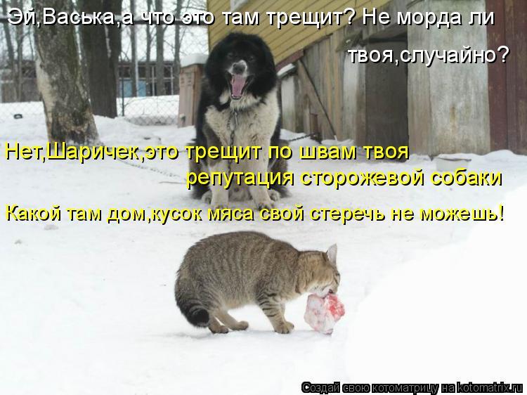 Котоматрица: Эй,Васька,а что это там трещит? Не морда ли твоя,случайно? Нет,Шаричек,это трещит по швам твоя репутация сторожевой собаки Какой там дом,кусо