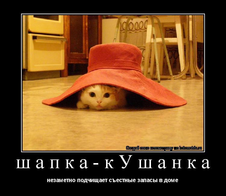 Котоматрица: шапка-кУшанка незаметно подчищает съестные запасы в доме