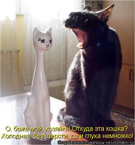 Котоматрица: Холодная, без шерсти, да и глуха немножко! О, боже мой, хозяйка! Откуда эта кошка?