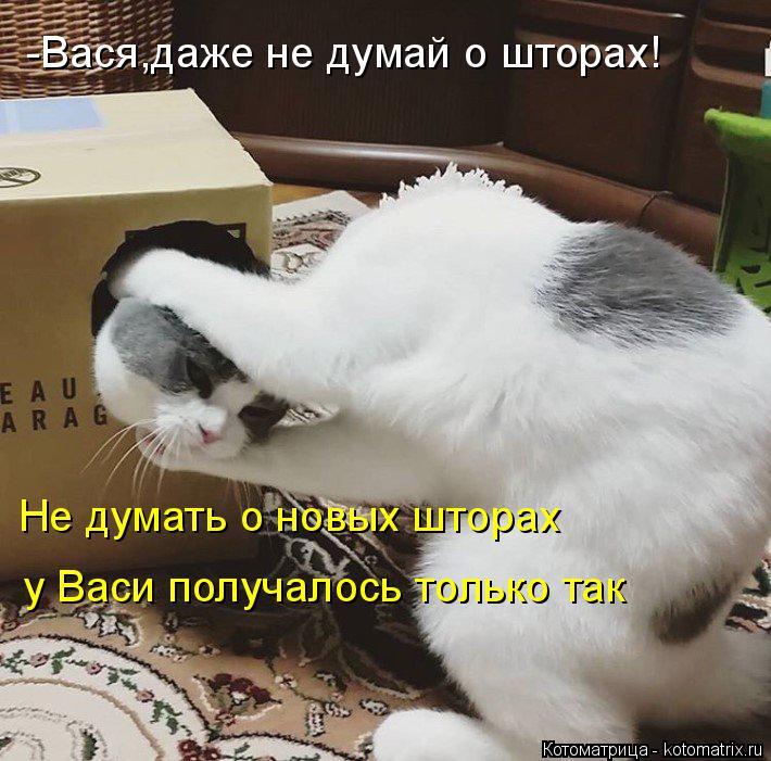 Котоматрица: -Вася,даже не думай о шторах! Не думать о новых шторах  у Васи получалось только так