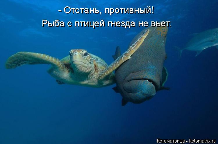 Котоматрица: - Отстань, противный! Рыба с птицей гнезда не вьет.