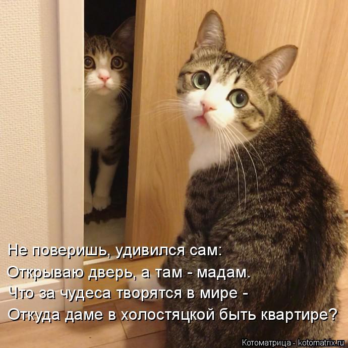 Котоматрица: Не поверишь, удивился сам: Открываю дверь, а там - мадам. Что за чудеса творятся в мире - Откуда даме в холостяцкой быть квартире?