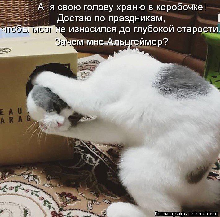 Котоматрица: А  я свою голову храню в коробочке! Достаю по праздникам,  чтобы мозг не износился до глубокой старости. Зачем мне Альцгеймер?