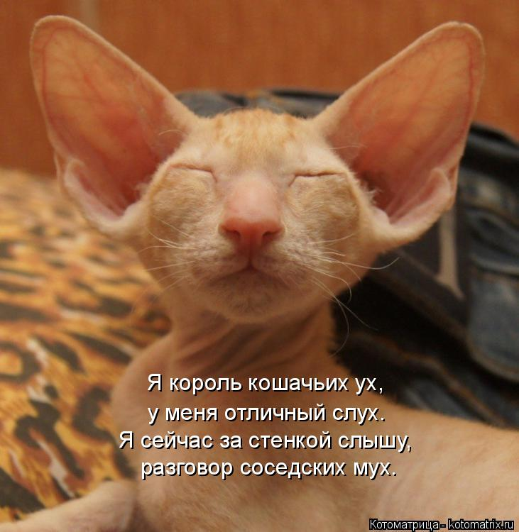 Котоматрица: разговор соседских мух. Я сейчас за стенкой слышу, Я король кошачьих ух, у меня отличный слух.