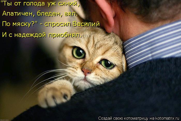 """Котоматрица: """"Ты от голода уж синий, Апатичен, бледен, вял. По мяску?"""" - спросил Василий И с надеждой приобнял."""