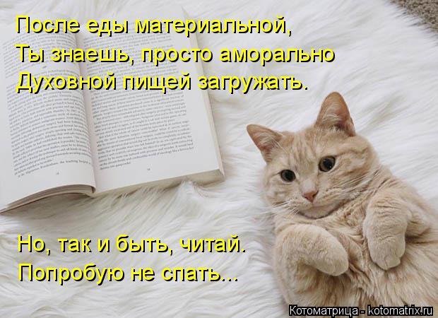 Котоматрица: После еды материальной, Ты знаешь, просто аморально Духовной пищей загружать. Но, так и быть, читай. Попробую не спать...