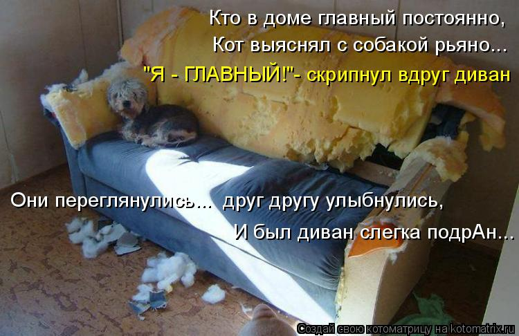 """Котоматрица: Кто в доме главный постоянно, Кот выяснял с собакой рьяно... """"Я - ГЛАВНЫЙ!""""- скрипнул вдруг диван И был диван слегка подрАн... Они переглянулись."""