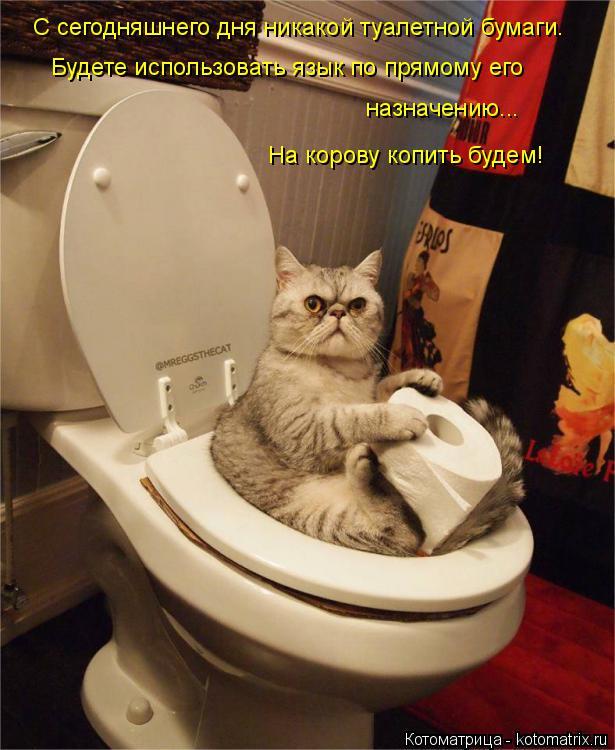 Котоматрица: С сегодняшнего дня никакой туалетной бумаги. Будете использовать язык по прямому его  назначению... На корову копить будем!