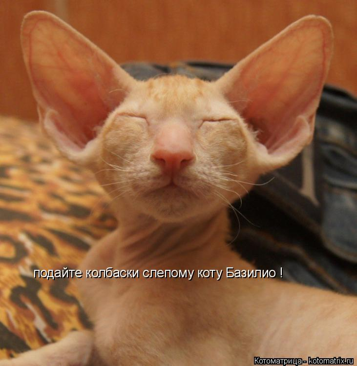 Котоматрица: подайте колбаски слепому коту Базилио !