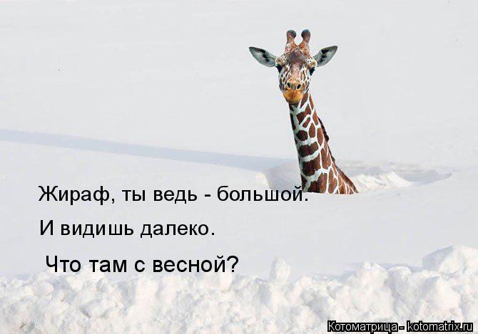 Котоматрица: Жираф, ты ведь - большой. И видишь далеко. Что там с весной?