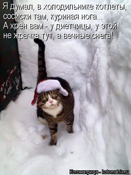 Котоматрица: Я думал, в холодильнике котлеты, сосиски там, куриная нога... А хрен вам - у диетчицы, у этой не жрачка тут, а вечные снега!