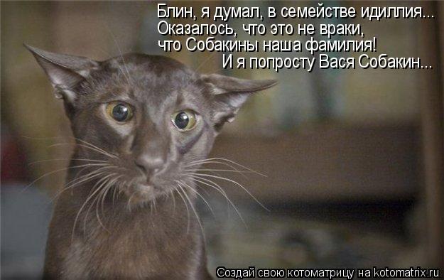 Котоматрица: Блин, я думал, в семействе идиллия... Оказалось, что это не враки, что Собакины наша фамилия! И я попросту Вася Собакин...