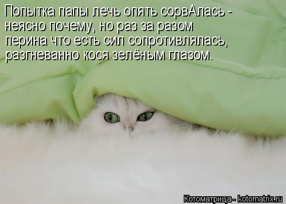 http://kotomatrix.ru/images/lolz/2018/03/31/kotomatritsa_h.jpg
