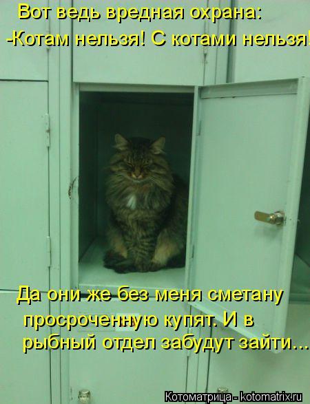 Котоматрица: Вот ведь вредная охрана: -Котам нельзя! С котами нельзя! Да они же без меня сметану просроченную купят. И в  рыбный отдел забудут зайти....