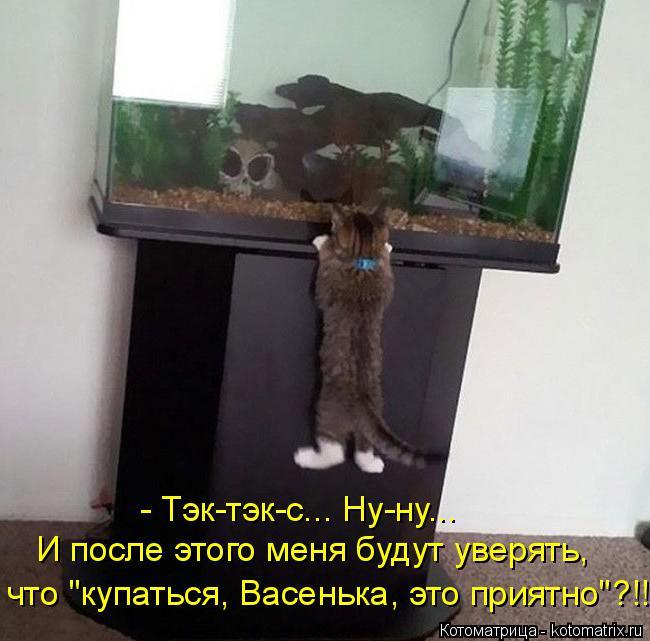 """Котоматрица: - Тэк-тэк-с... Ну-ну... И после этого меня будут уверять, что """"купаться, Васенька, это приятно""""?!!"""
